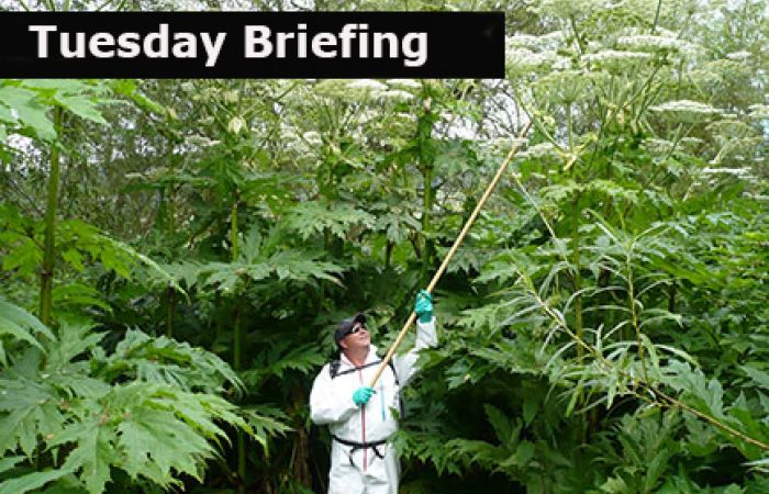 Tuesday Briefing: App training for Non-native invasive plant species