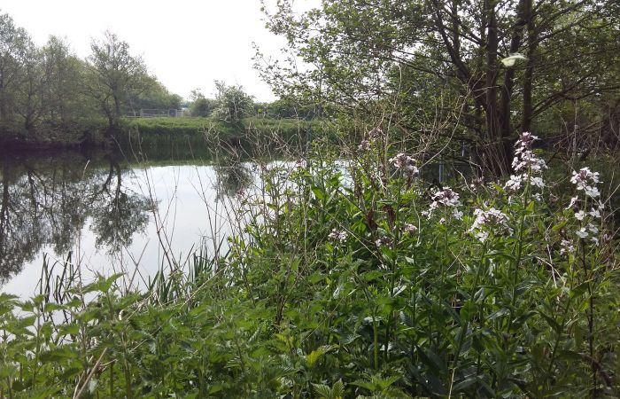 BLOG: View from the River Bank – Eyes Open for Nature
